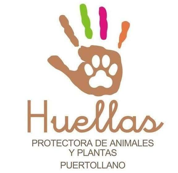 La protectora de animales Huellas Puertollano reclama al Ayuntamiento por impago